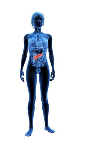 The pancreas | Australian Pancreatic Cancer Genome Initiative